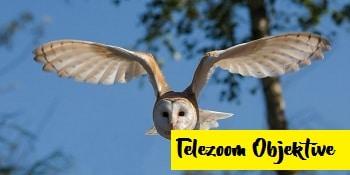 Telezoom Objektive